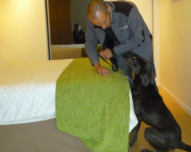 rencontre avec mylie le chien renifleur de punaises de lit radio scoop la radio de lyon. Black Bedroom Furniture Sets. Home Design Ideas