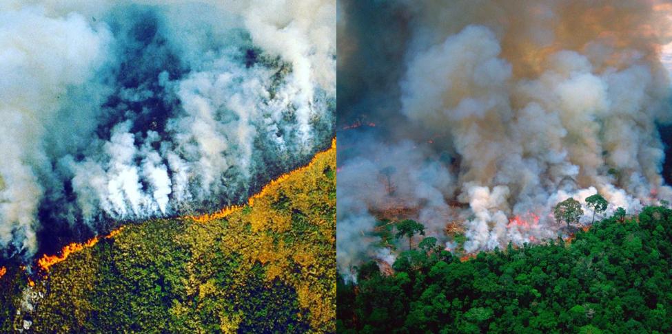 Incendies en Amazonie : Les stars se mobilisent... mais avec de fausses photos !