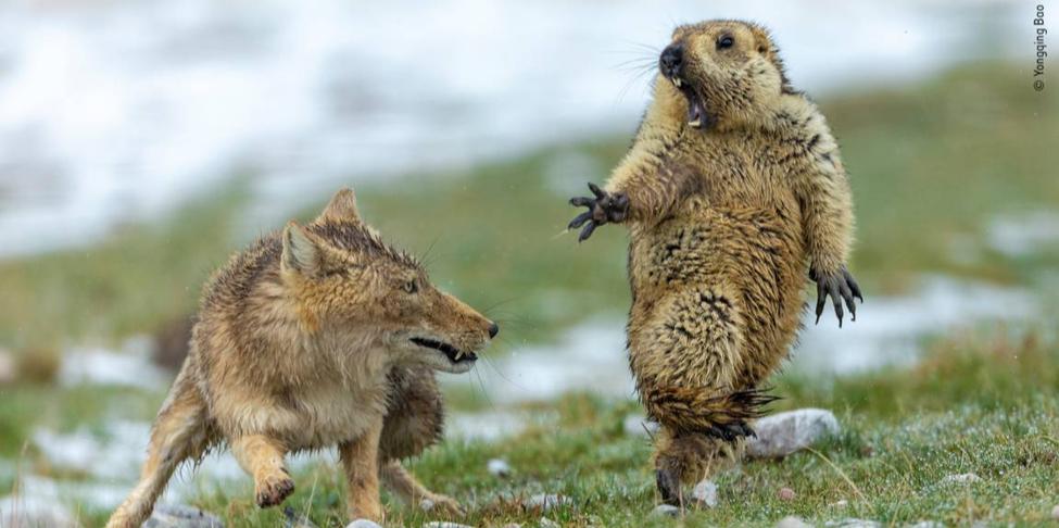 Découvrez les plus belles photos animalières primées à Londres